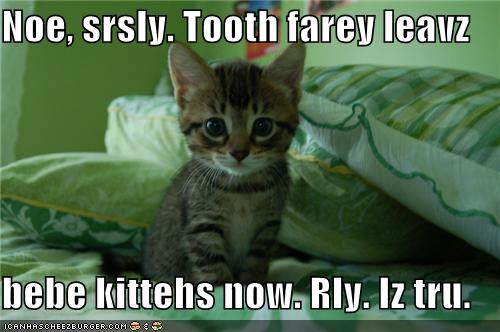 funny-pictures-the-tooth-fairy-leaves-kittens-now