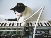 vocoder kitty