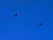 BALÉ de URUBUS  movimento 64 (dueto no céu azul).
