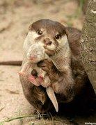 Pixdaus - esquilo mãe e filhote