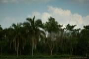 OLHARES por TEREZINHA SOUTO em 2011 (139)