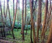 Vegetação típica do Parque do Cocó