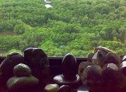 Parque do Cocó visto da Minha Janela
