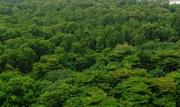Manguezal do Parque Ecológico do Cocó - Foto tirada da minha janela