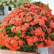 Las flores de mi jardin