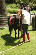 Pony rides at Firtune Park Fun Day