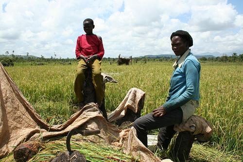 Upper Dam:harvesting