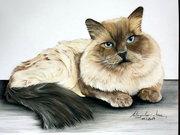 Katzen Porträt