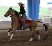 Sport Horse 2010