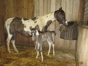 One of our 2011 foals