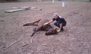 Brandy W learning to lay a colt down