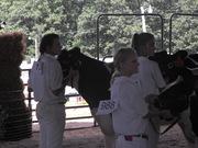 2008 Fair - Dairy Show