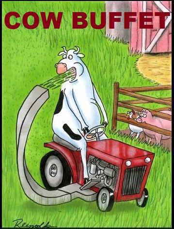 cowbuffet