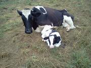 The future of the farm...well at least the future of breeding :)