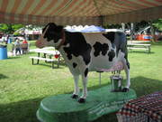 A mooing and milking life-size cow statue owned by the St. Albans Milk Co-op