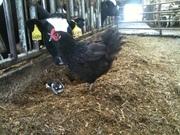 Champlainside Farm