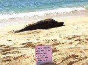 Monk Seal in HI