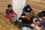 Proyecto de Soberanía Alimentaria