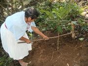 Terrazas a plantas de cafe para retencion de suelos