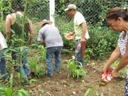 Diversas formas de aplicar biol a cultivos. Trabajo grupal.