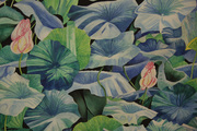 Waterlilies Afloat
