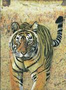 Tiger Burning Bright