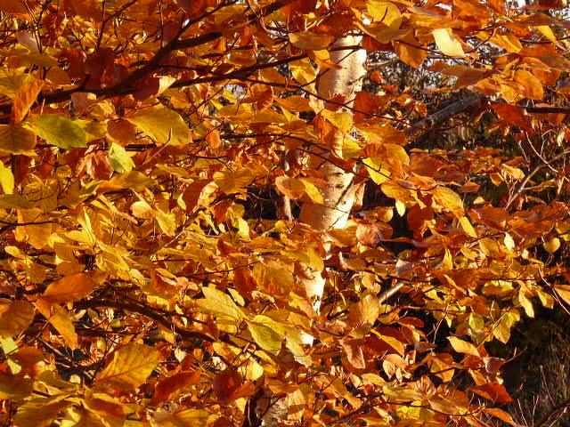 Arany ősz