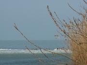 A tél végi Balaton