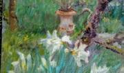 Kilmokea Daffodils