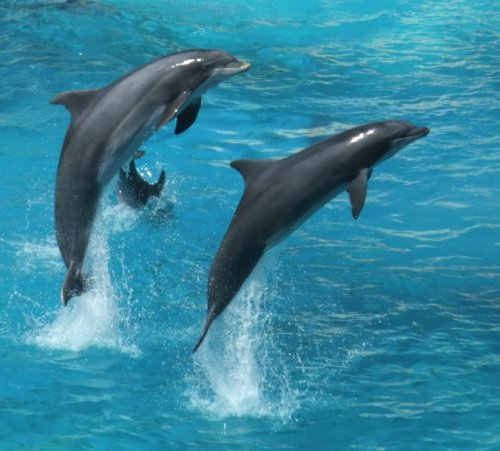 2-dolphins