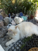 Silversand Gemstone Cat paradise Timmy