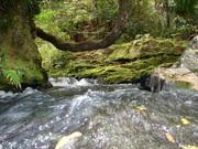 dam river feeder