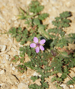 Spring In The Air Feb 2013 Tiny Delicate Flower