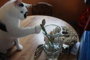 Oreo, her cat