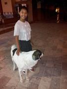 Nafplio Dog