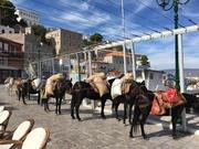 Mules waiting at dock