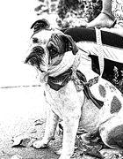 Bulldog 04_ JU8S3441