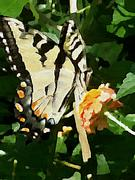 A painted Butterfly
