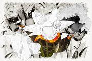 Red-tulip-12x