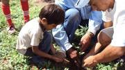reforestación con algarrobo