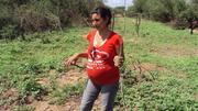 plantaciones de algarrobo