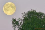 Månen över Moskosel ungefär kl.22:00 den 23 juli 2013.