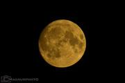 Supermånen ett dygn innan den blev helt full. Den 13 nov. 2016 kl 16:49.