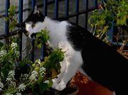 BRIGIT- a jardineira web