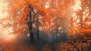 Φθινοπωρινές εικόνες