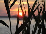 7-05-09_sunset-grass