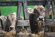 Recent happenings around the farm