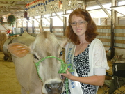 My 1st 4-H cow