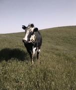 CUDS around the farm