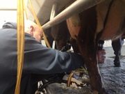Milking Mayor 2